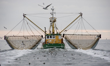 """What Future for Fisheries in the Adriatic-Ionian Basin?"""